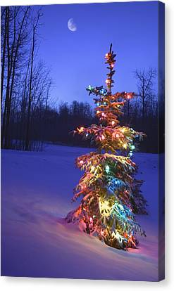 Christmas Tree Outdoors Under Moonlight Canvas Print by Carson Ganci