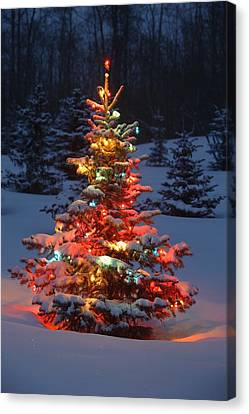 Christmas Tree With Lights Outdoors In Canvas Print by Carson Ganci