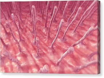 Cilia Canvas Print by MedicalRF.com