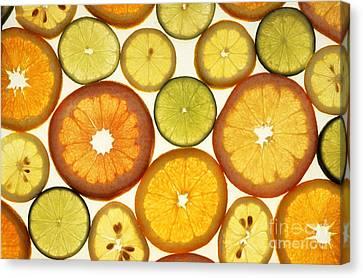 Citrus Slices Canvas Print by Photo Researchers