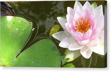 Close-up Lily Canvas Print by Debbie Finley