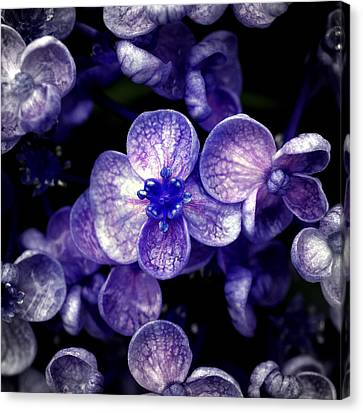 Close Up Of Purple Flowers Canvas Print by Sner3jp