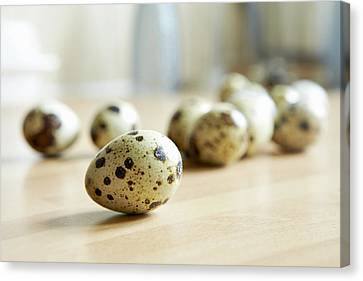 Close Up Of Quail Eggs On Counter Canvas Print by Debby Lewis-Harrison