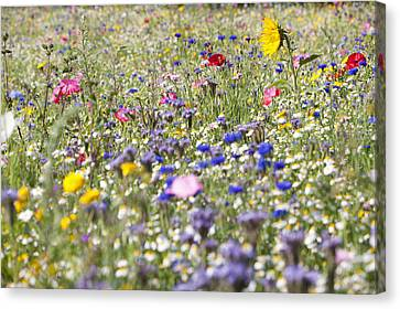 Close Up Of Vibrant Wildflowers In Sunny Field Canvas Print by Echo