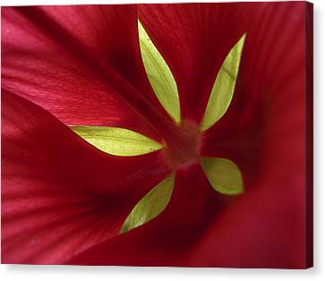Closeup Of Hibiscus Petals Canvas Print by Amy White & Al Petteway