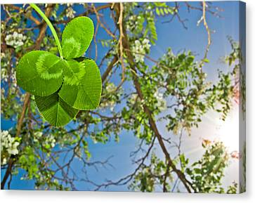 Clover And Sunflare 1 Canvas Print by Amber Flowers