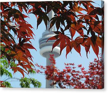 Cn Tower With Japanese Maple Canvas Print by Alfred Ng