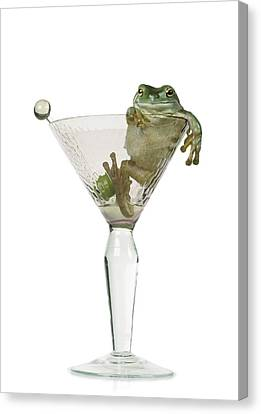 Cocktail Frog Canvas Print by Darwin Wiggett