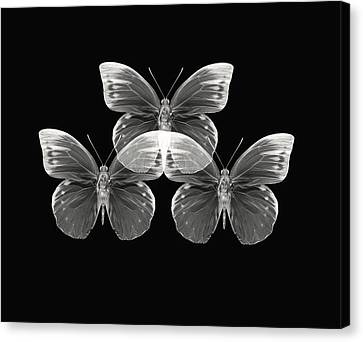 Collection2 Canvas Print by Lourry Legarde