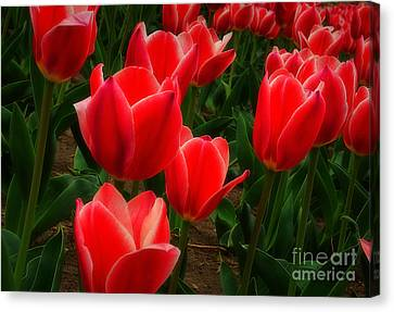 Color Me Red Canvas Print by Fred Lassmann