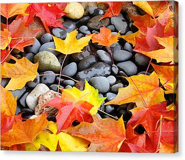 Colorful Autumn Leaves Prints Rocks Canvas Print by Baslee Troutman