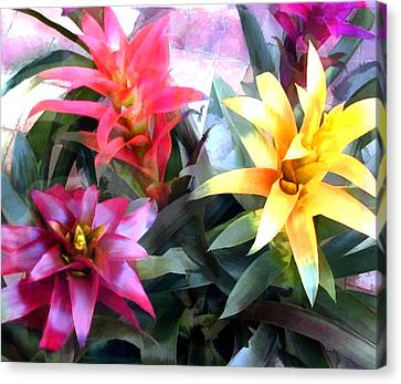 Colorful Mixed Bromeliads Canvas Print by Elaine Plesser