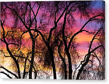 Colorful Silhouetted Trees 27 Canvas Print by James BO  Insogna