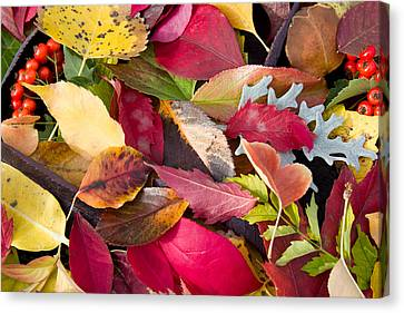 Colors Of Autumn Canvas Print by Shane Bechler