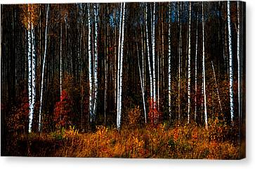 Colors Of Fall Canvas Print by Jenny Rainbow