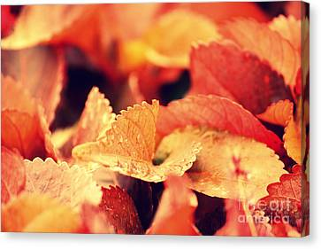 Colour Me Red Canvas Print by Vishakha Bhagat