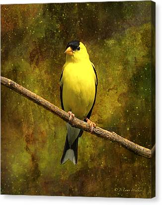 Contemplating Goldfinch Canvas Print by J Larry Walker