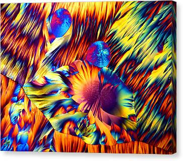 Copper And Magnesium Sulphate, Lm Canvas Print by Dr Keith Wheeler