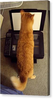 Copy Cat Canvas Print by Cynthia Harvey