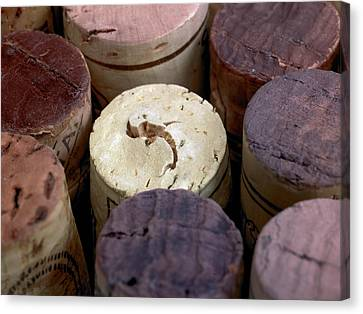 Corks Canvas Print by Maria Toutoudaki