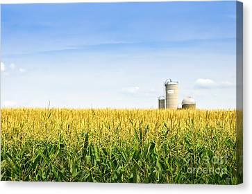 Corn Field With Silos Canvas Print by Elena Elisseeva