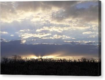 Cornfield Sunrise Canvas Print by Bill Cannon