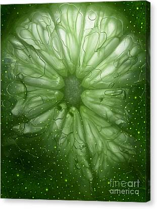 Cosmic Lime Canvas Print by Janeen Wassink Searles
