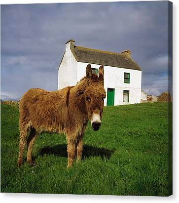 Cottage And Donkey, Tory Island Canvas Print by The Irish Image Collection