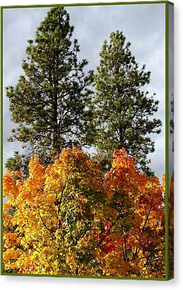 Country Color 24 Canvas Print by Will Borden