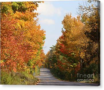 Country Road Canvas Print by Beverly Livingstone