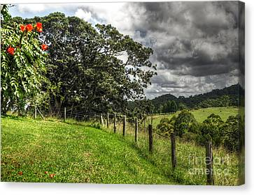 Countryside With Old Fig Tree Canvas Print by Kaye Menner