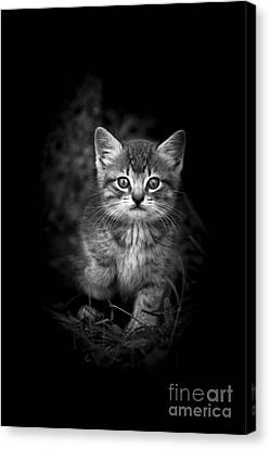 Courageous Canvas Print by Kim Henderson