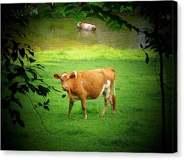 Cows Canvas Print by Michael L Kimble