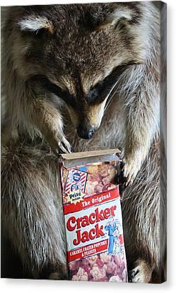 Cracker Jack Canvas Print by Paulette Thomas