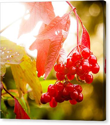 Cranberry Bliss Canvas Print by Matt Dobson