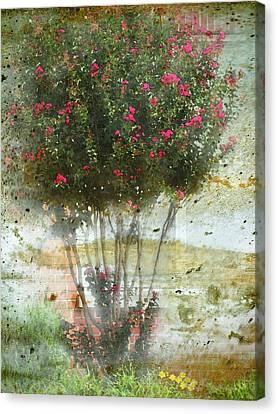 Crape Myrtle Canvas Print by Debbie Portwood