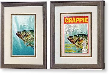 Crappie And Minnows Canvas Print by JQ Licensing