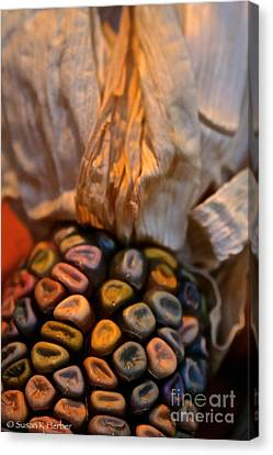 Crazee Corn Colors Canvas Print by Susan Herber