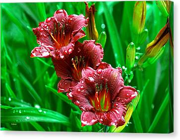 Crimson Lilies In April Shower Canvas Print by Lisa  Spencer