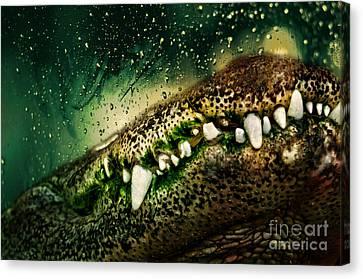 Crocodile Teeth Canvas Print by Denis Pristavko