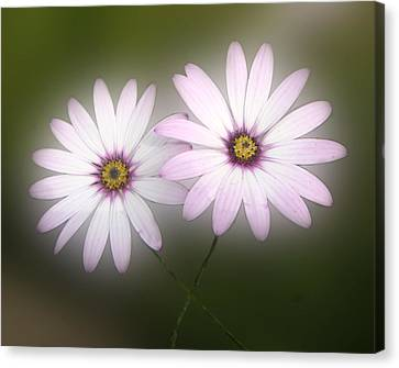 Flowers Canvas Print featuring the photograph Crossing Daisies by Roberto Alamino