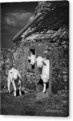 Crowded Irish Rural House Canvas Print by Joe Fox