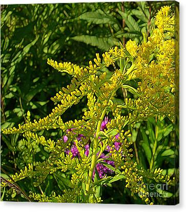 Curves Of Goldenrod Canvas Print by Judi Bagwell
