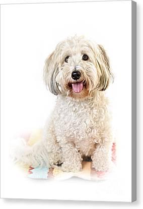 Cute Dog Portrait Canvas Print by Elena Elisseeva
