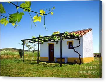 Cute House Canvas Print by Carlos Caetano