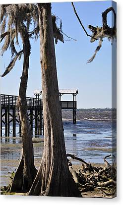Cypress And Dock At Low Tide Canvas Print by Tiffney Heaning