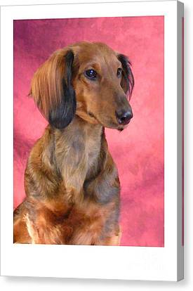Dachshund 472 Canvas Print by Larry Matthews