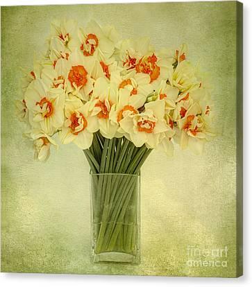Daffodils In A Glass Vase Canvas Print by Ann Garrett