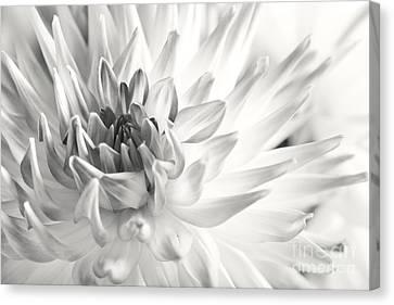Dahlia Flower 02 Canvas Print by Nailia Schwarz