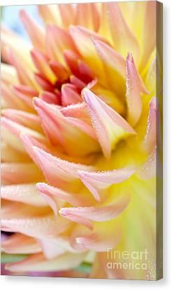 Dahlia Flower 13 Canvas Print by Nailia Schwarz
